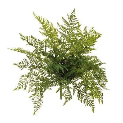 Pots & Planters Fern Leather Bush Green 50CM Length