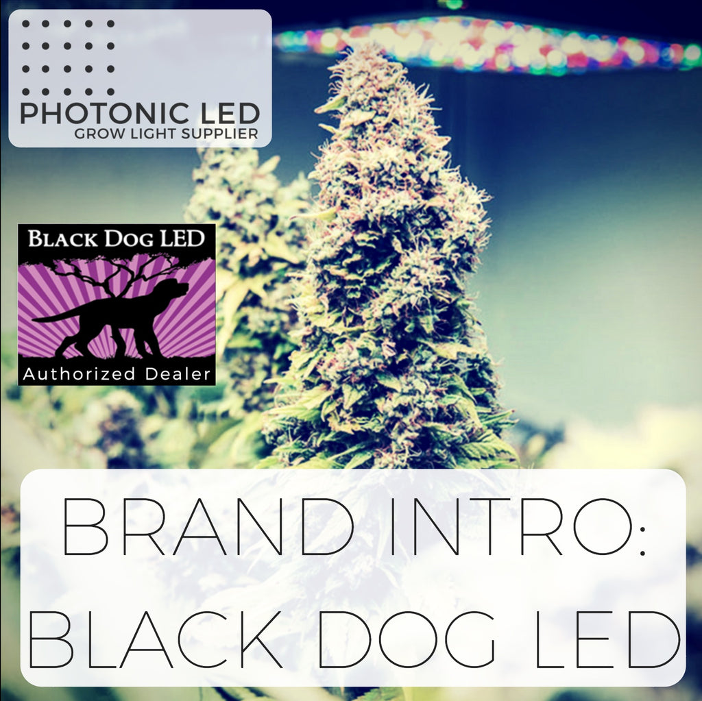 An Intro to Our Brands - 1. Black Dog LED