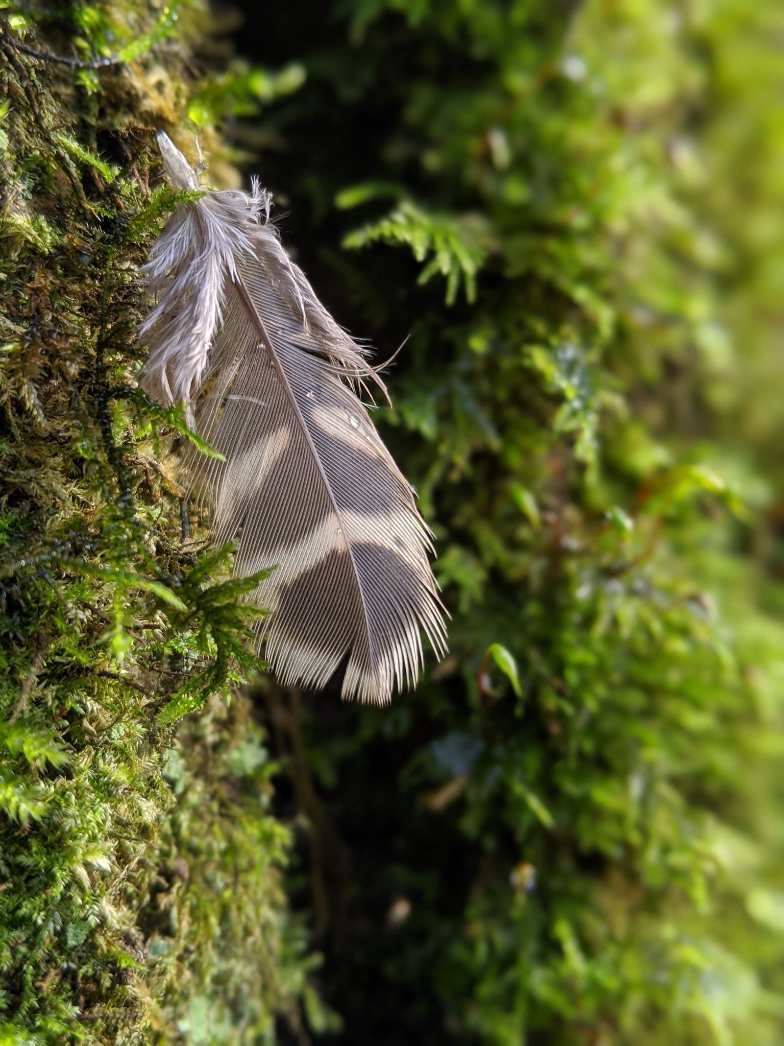 a lost feather in the moss