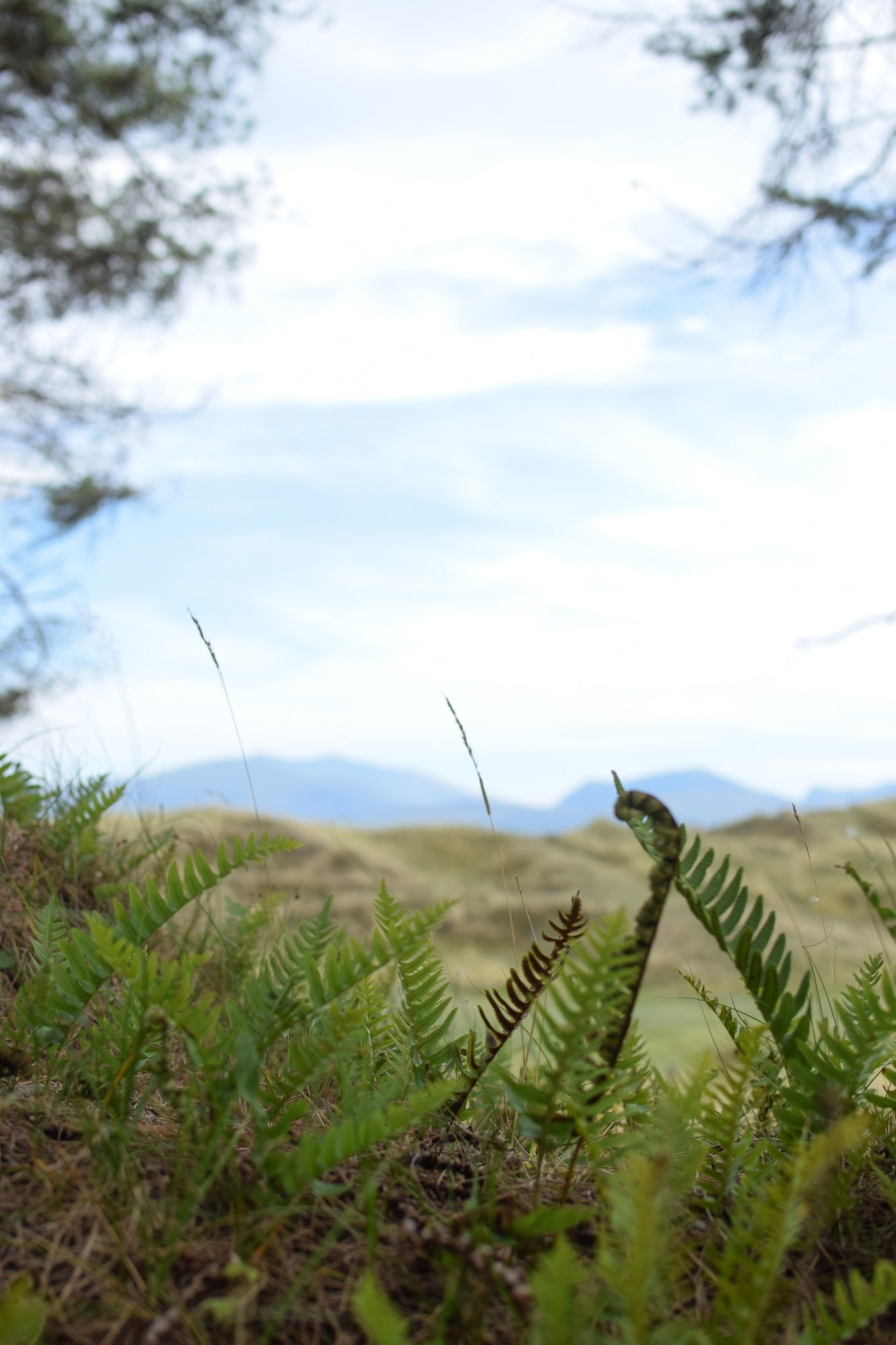 Newborough Forest, Angelsey with Snowdonia in the background
