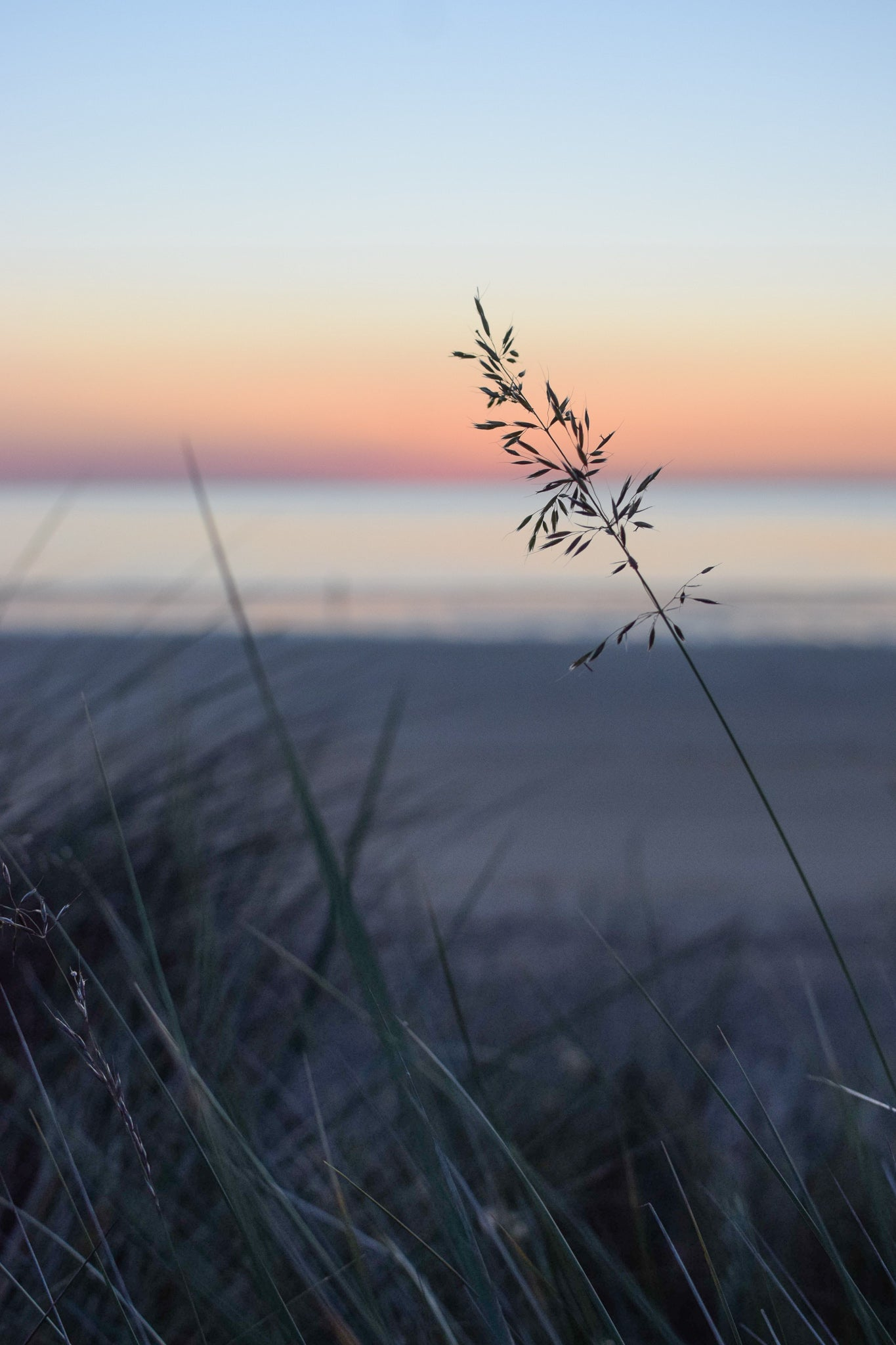 early morning light on the dunes at Newton by the sea, Northumberland