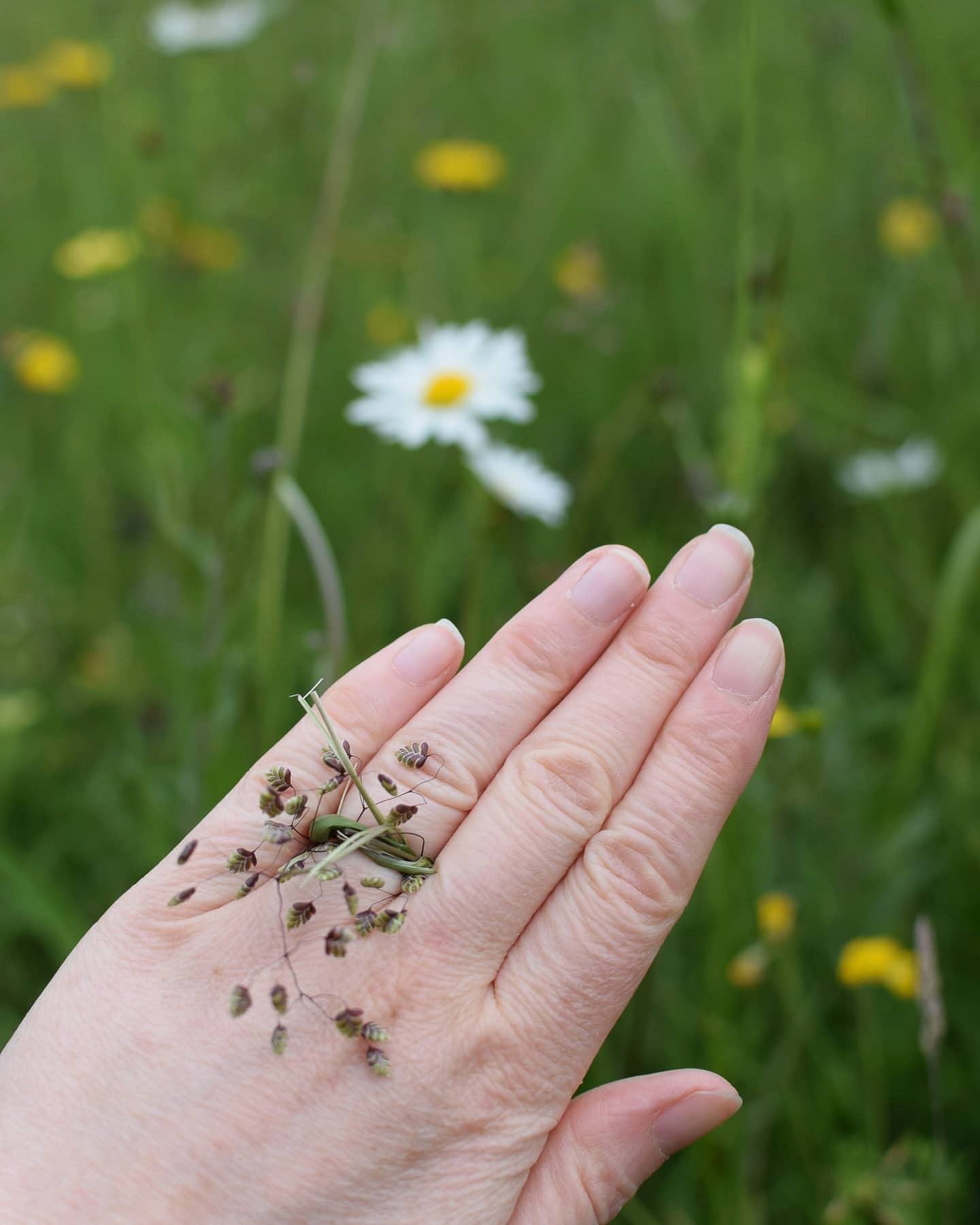 he proposed to me in the meadow at midsummer with a ring made of quaking grass