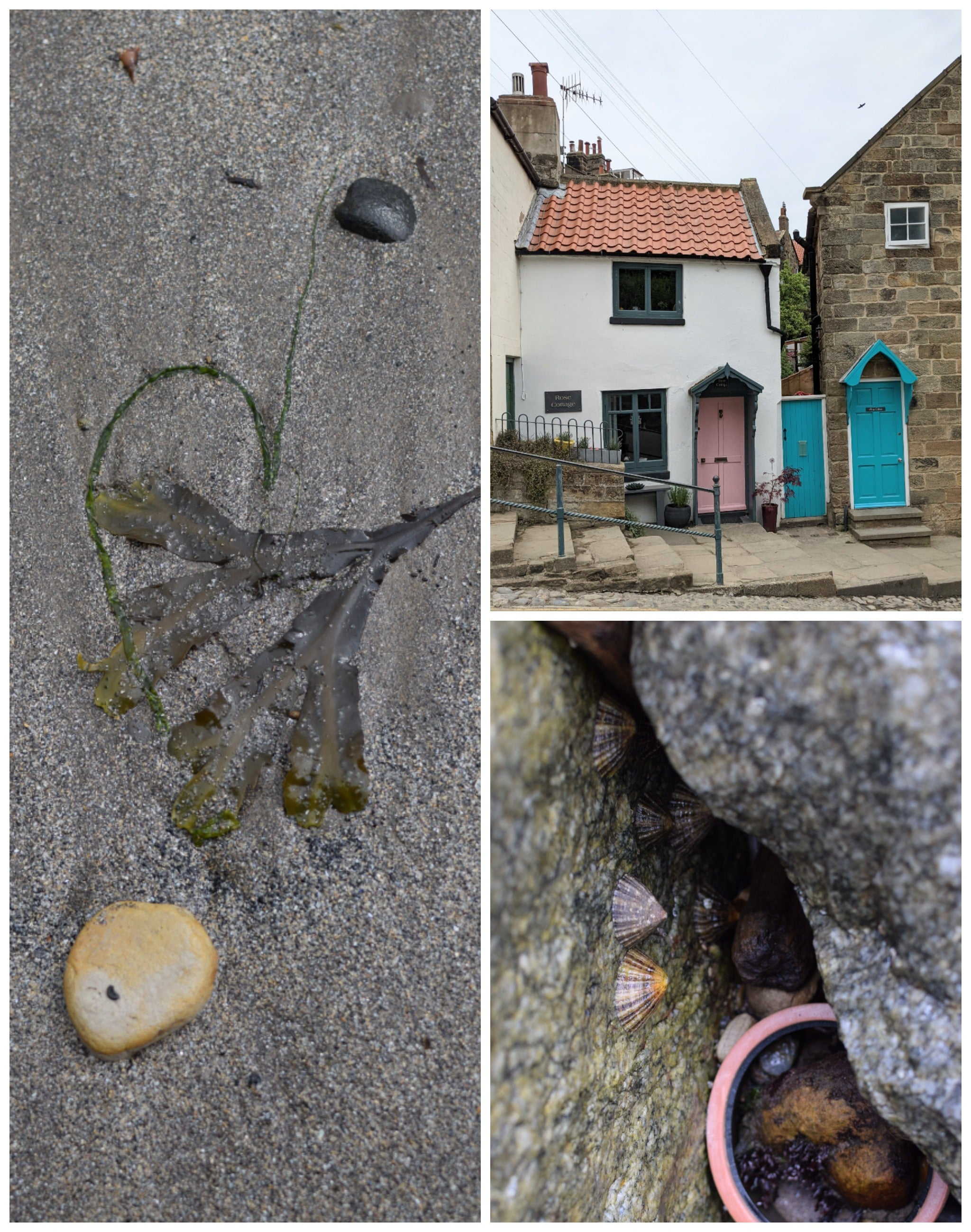 pretty cottages and robin hoods bay, limpets on a rock
