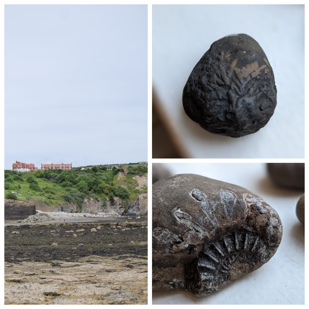 fossilised fern and ammonite at robin hoods bay