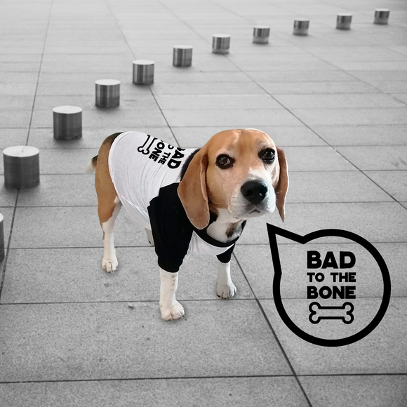 'Bad to the bone' dog shirt