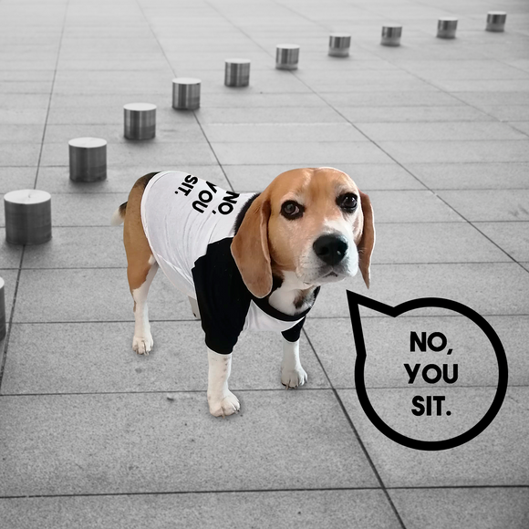 'No, you sit.' dog shirt