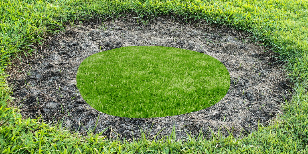 Circle in the grass