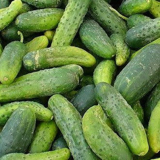 Cucumber - Pickling Mix