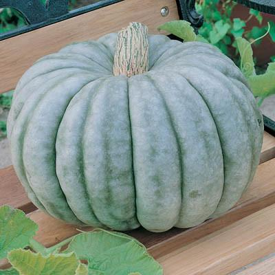 Decorative Pumpkin & Squash - Jarradale (Small)