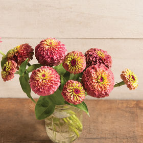 Zinnia Seed - Queen Red Lime