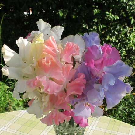 Sweet Pea Seed - Summer Romance Mix