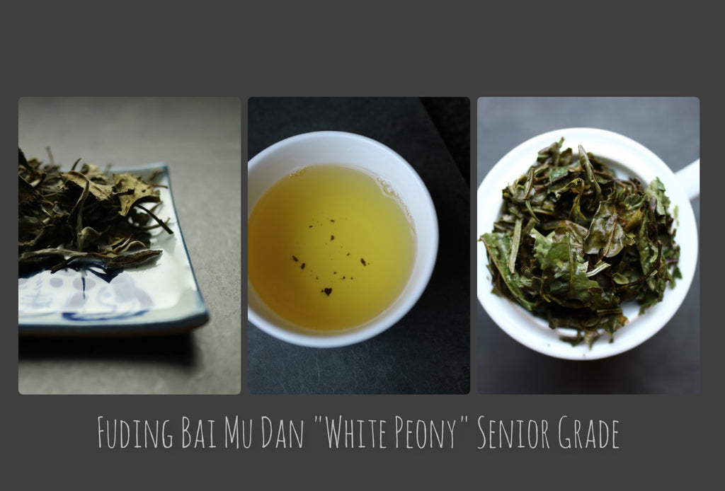 "Fuding Bai Mu Dan ""White Peony"" Senior Grade - She Fang Boutique Tea"