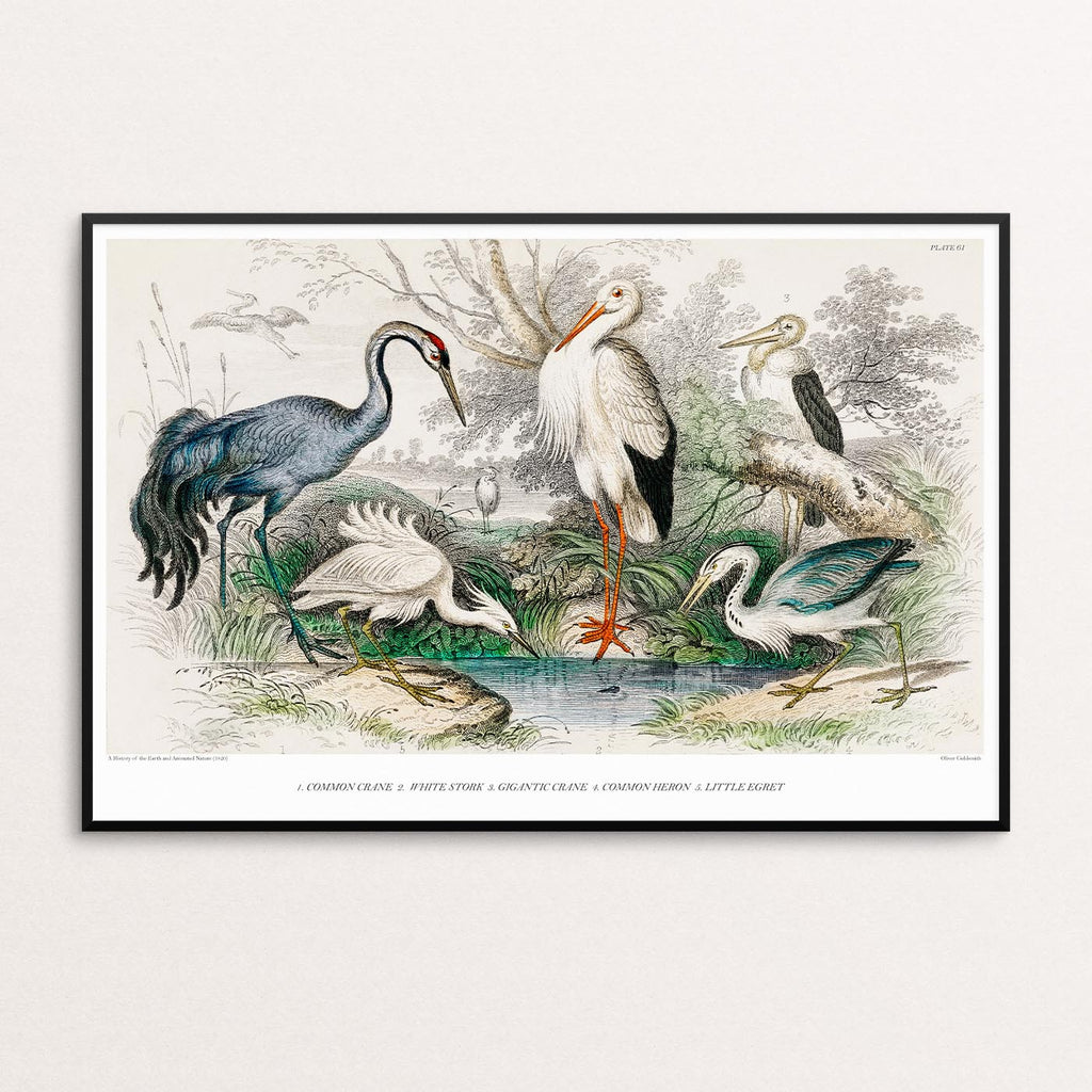 THE STUDY OF CRANES VINTAGE POSTER PRINT