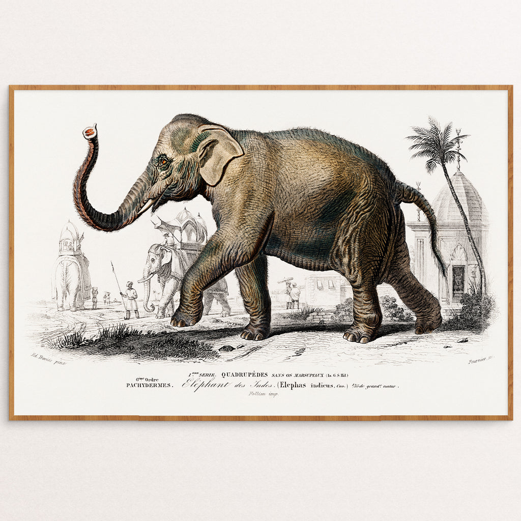 ILLUSTRATED  VINTAGE ELEPHANT PRINT