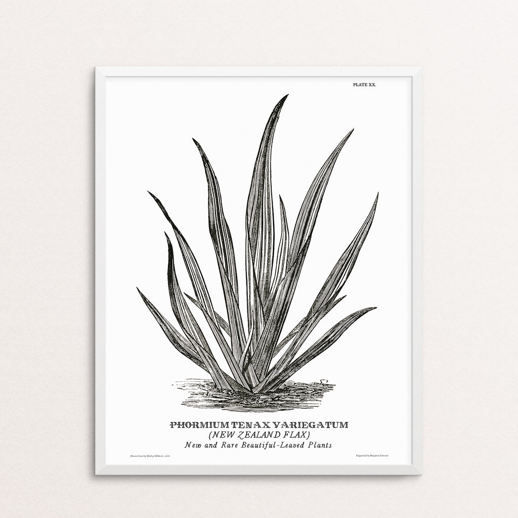 NEW ZEALAND FLAX POSTER PRINT