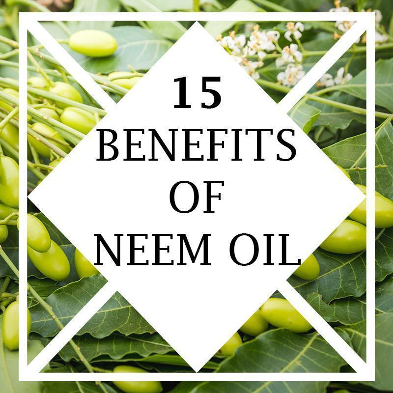 15 Benefits of Neem Oil_Organic Neem Oil_ Quality is