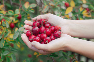 Top Benefits and Uses for Rosehip Oil and Rosehip Butter