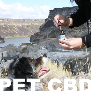 Zatural is the best source for your pets CBD needs