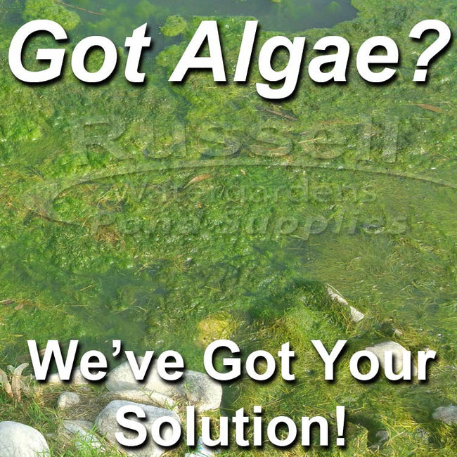 Clean Your Pond and Waterfall Rocks, Kill Green Water Algae, Kill String Algae, Get Rid of Scum