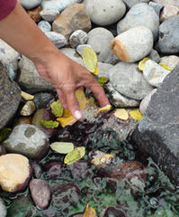 You can only remove leaves from conventional pondless pondless waterfalls by hand!