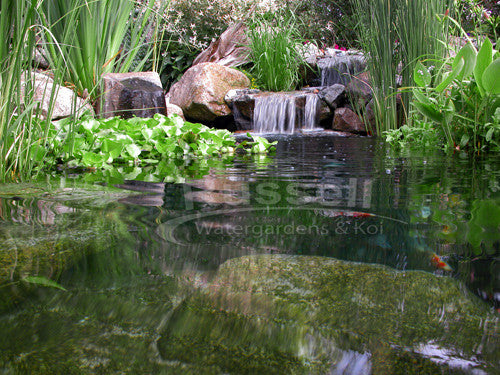 Ahi Series 11' x 11' Ultimate Water Garden Pond Kit