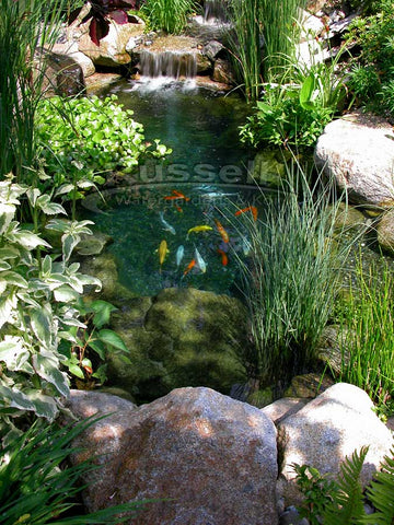 Pea Gravel In A Water Garden Pond Is Easier To Keep Clean Than River Rock.