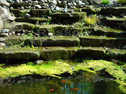 The truth about annually cleaned waterfall filters is that they are difficult to clean and cause algae and fish disease