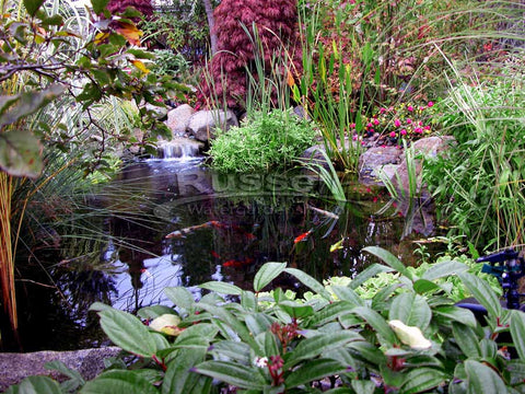 A water garden pond from Russell Watergardens & Koi and Hydro Vortex™ will be easier to clean and keep clean!