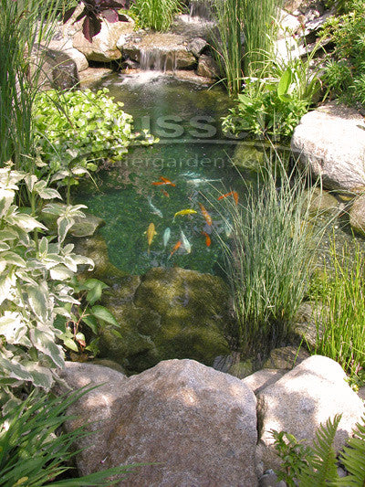 6'x11' Pond Kit - Ahi Series Ultimate Water Garden Pond Kit