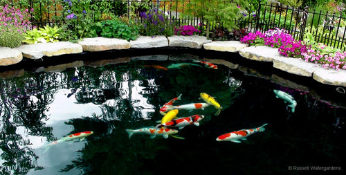 Pond Pumps, Pond Supplies, Fish Foods | Pondless Waterfall