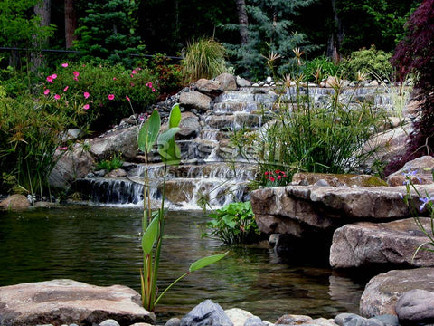 Dolphin Hydro Vortex™ large waterfall filters let you build beautiful water garden ponds.