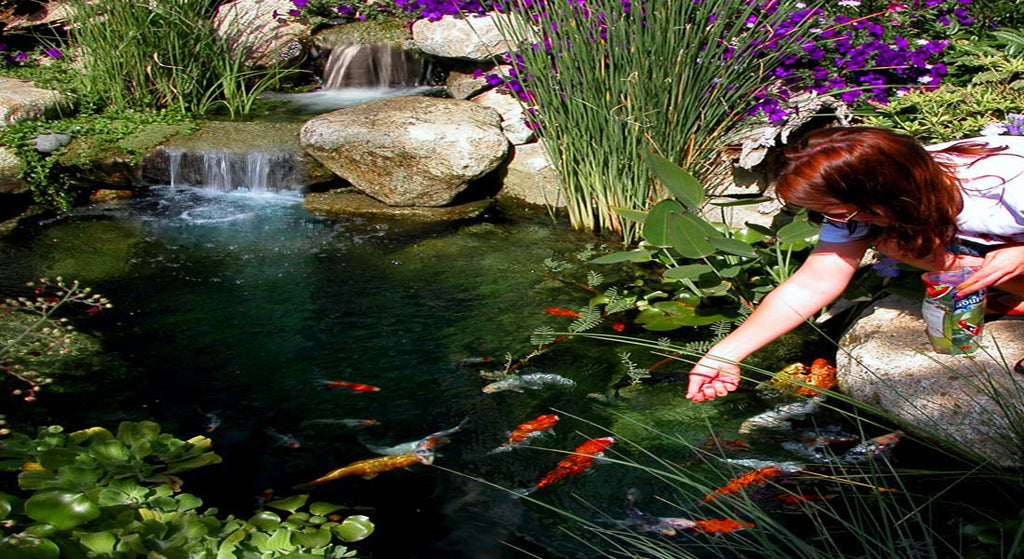 Pond pumps pond supplies fish foods russell for Amazon fish ponds
