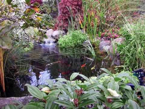A Hybrid Pond™ looks more natural in the landscape than a koi pond.
