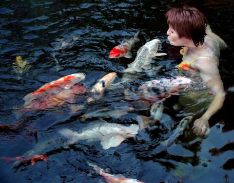 Pamela Russell, one of the company founders swimming with koi in a crossover pond.