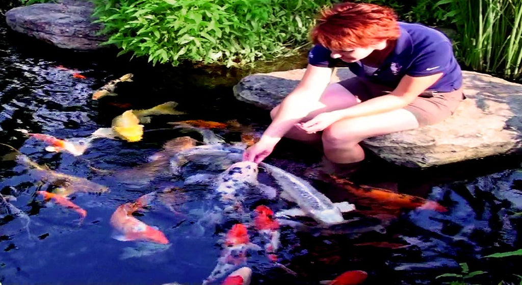 Pond Pumps Pond Supplies Fish Foods Russell Watergardens Koi