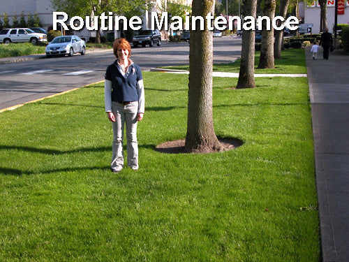 Why routine pond maintenance is good