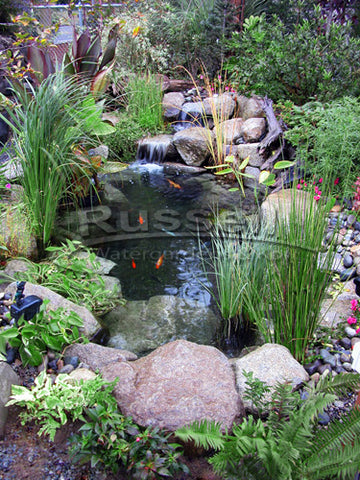 The history of Russell Watergardens & Koi includes innovation and invention.