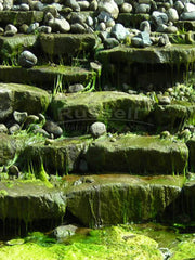 A conventional pondless waterfall with stream feeds algae.