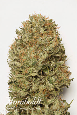 https://cdn.shopify.com/s/files/1/1719/2881/files/HSO-BLUE-DREAM-AUTO.jpg?15288147721875469876