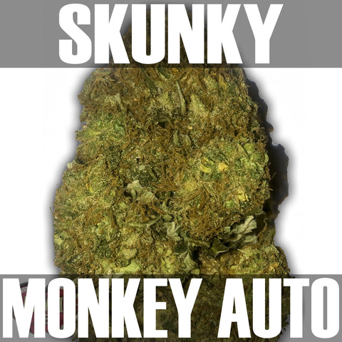 https://cdn.shopify.com/s/files/1/1719/2881/files/Skunky-Monkey-Text1.jpg?16517231933447725399