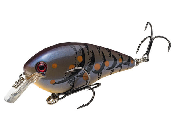 Strike King KVD Square Bill 1.5 Blue Craw