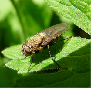 Types of Bugs That Prey On Log Homes- And How To Stop Them