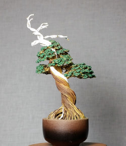 [Bonsai_Florida], [Bonsai_Wholesale], [TheBonsai_Supply]