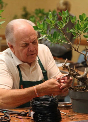 Appointment with Bonsai Artist, Ed Trout