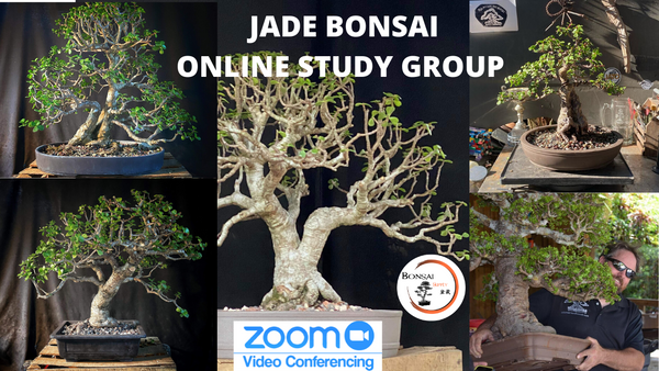 Jade Study Group (Zoom)