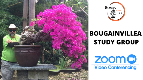 Bougainvillea Study Group (Zoom)