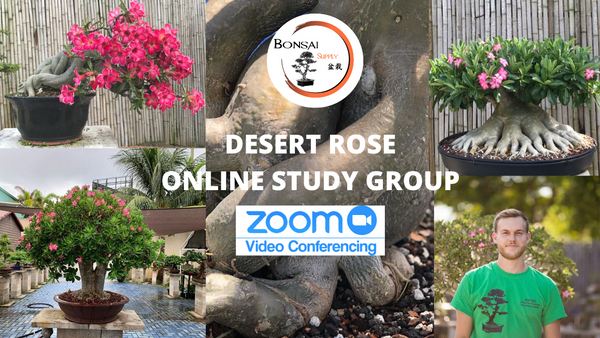 Desert Rose Study Group (Zoom)
