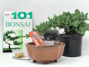 Juniper Bonsai Starter Kit