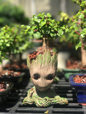 Bonsai Tree Baby Groot Jade