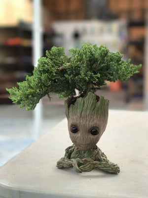 Bonsai Tree Baby Groot Juniper